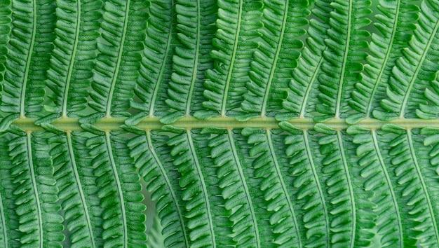 Папоротник на фоне тропических джунглей листья папоротника с растительным узором