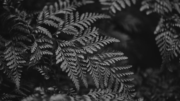 シダの葉はbw自然の背景にクローズアップ