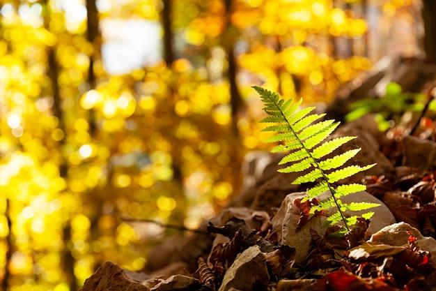 シダの葉をクローズアップ