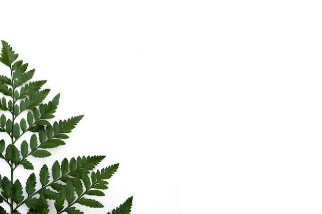 Фон из листьев папоротника