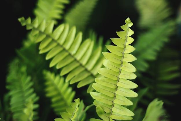 고사리 잎 녹색 자연 배경 고사리 잎