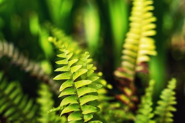 Папоротник лист зеленый природа фон лист папоротника