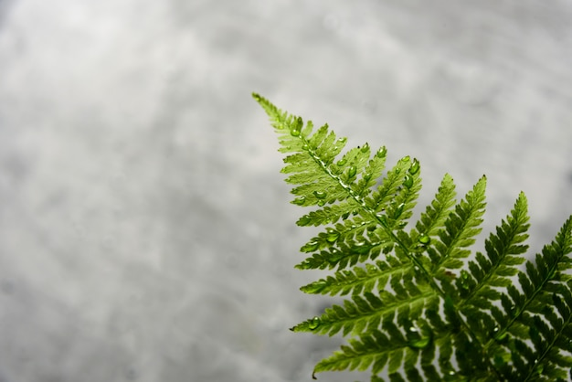Fern leaf on grey