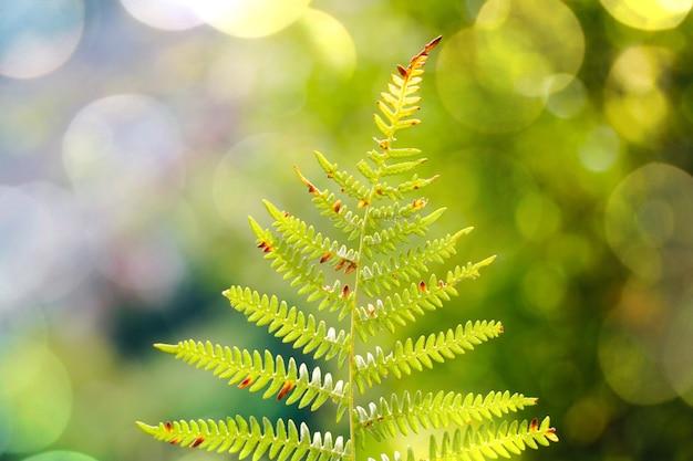자연의 가을 시즌에 고사리 잎
