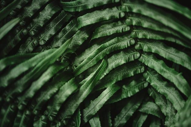 Лист папоротника на фоне природы макросъемки