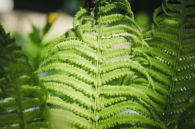 Fern leaf leaf of a green plant
