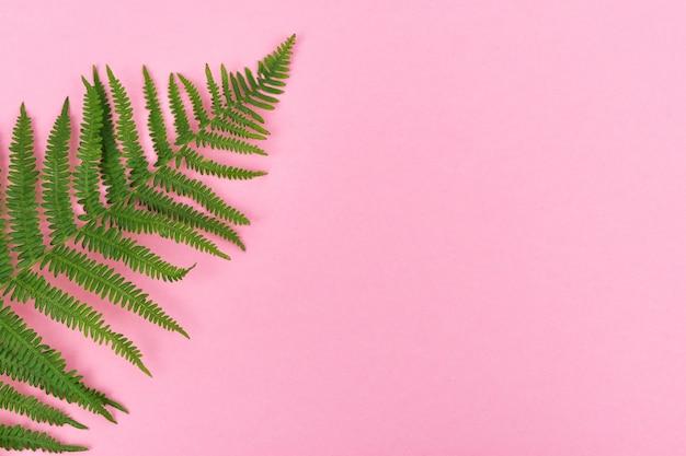 ピンクの背景にシダの葉、右側にコピー用のスペース。上面図。グラフィックリソースの概念。