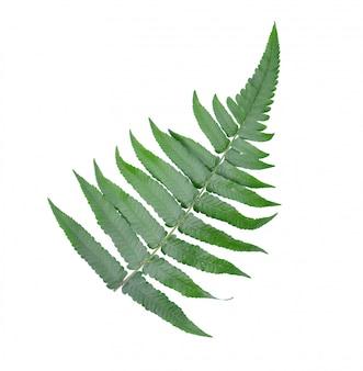 흰 벽에 고 사리 잎