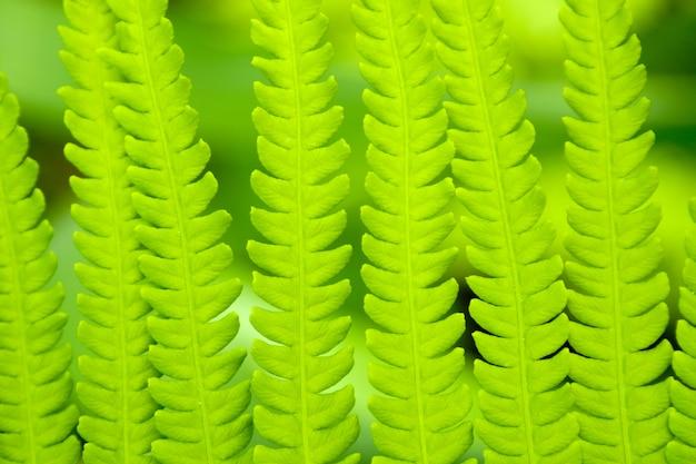 Fern leaf ornament background