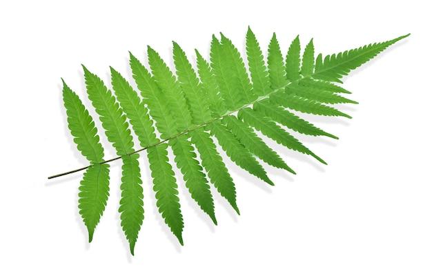 고 사리 잎 장식 단풍 절연