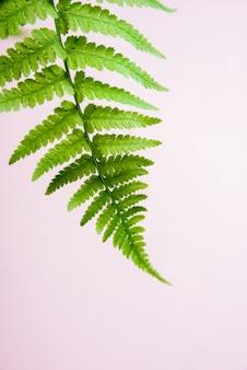 Fern leaf on pastel beige