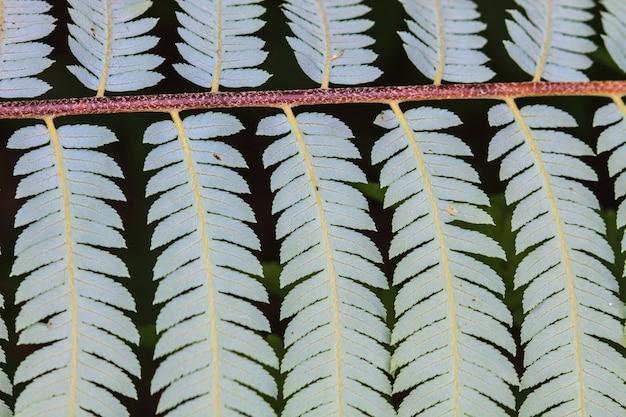 Fern leaf texture