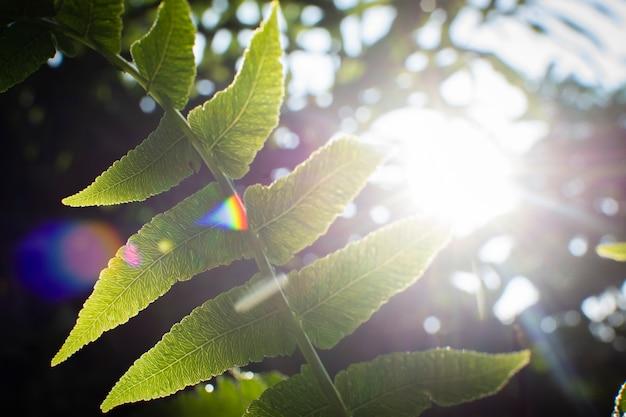 日光と朝の水滴とシダの葉