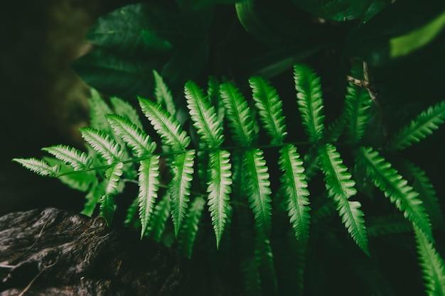 深い緑と暗い影の低い照明のシダの葉と熱帯低木。