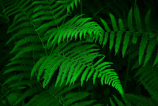 シダの葉と暗い森の小川