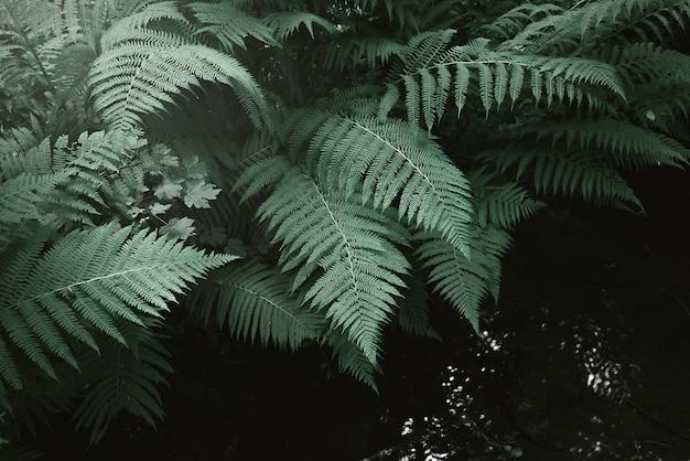 고사리 잎과 어두운 숲의 개울