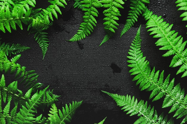 Fern leaves on a black wooden background in the form of a frame.