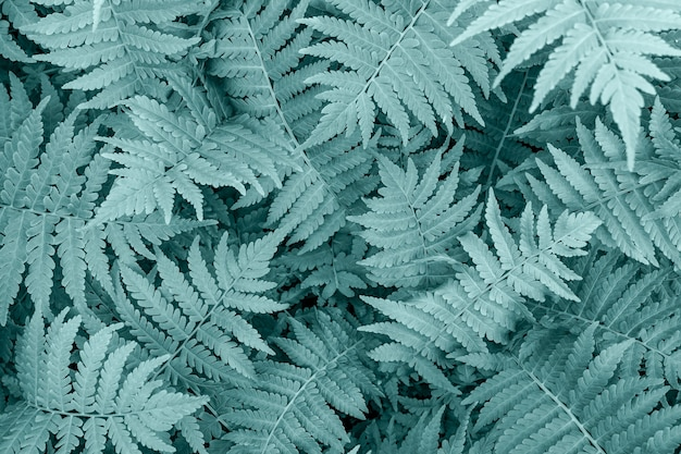 Fern leaves close-up as background. tidewater green color trend.