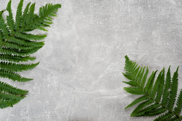 Fern leaves flat lay on concrete background.