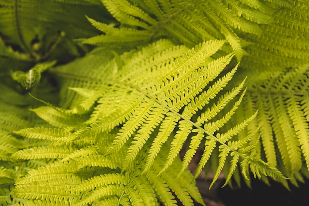 Fern leaves in the garden.
