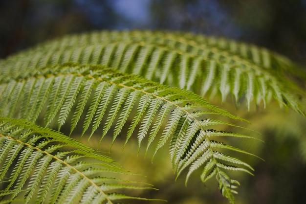 Fern leaves in the garden