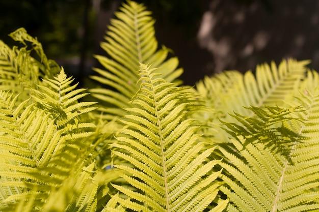 어두운 배경에 태양에 의해 조명 고사리 잎