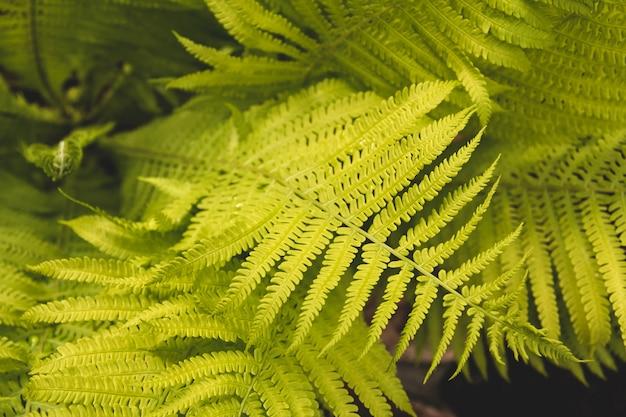 고 사리 정원에서 나뭇잎.