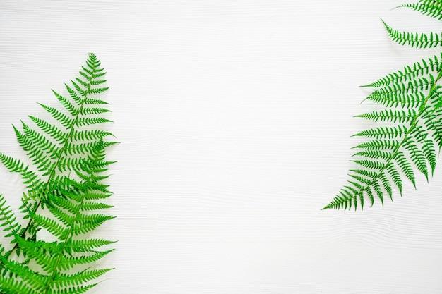 シダの葉白いテーブルの自然な背景画像