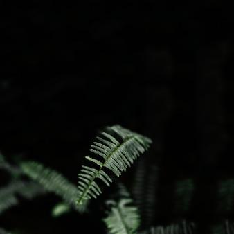 검은 배경에 고 사리 잎