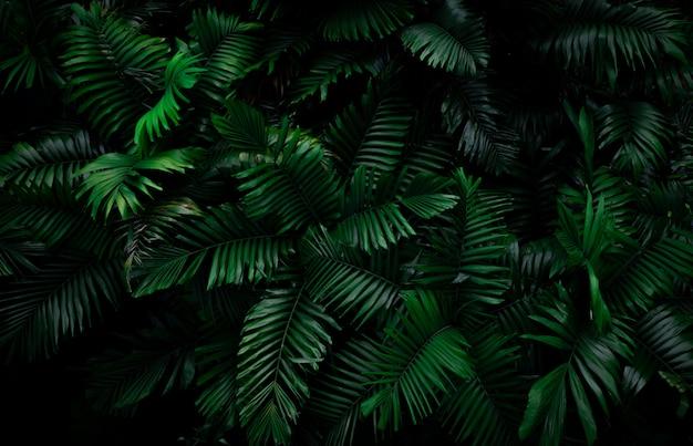 Листья папоротника на темной предпосылке в джунглях. густой темно-зеленый папоротник оставляет в саду ночью. природа абстрактный фон. папоротник в тропическом лесу. экзотическое растение.