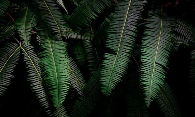 ジャングルの暗い背景にシダの葉。濃い濃い緑のシダは夜庭に残します。