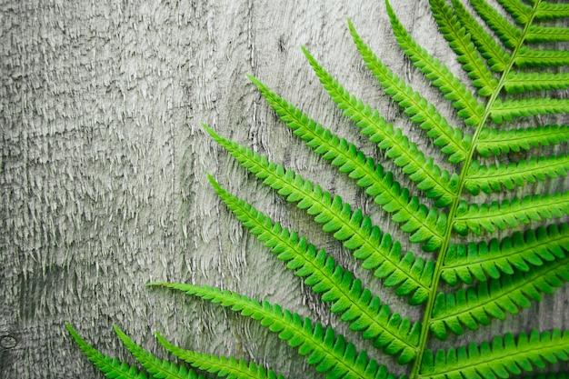 고사리는 오래된 나무 배경의 배경에 나뭇잎. 공간을 복사합니다. 위에서 볼.