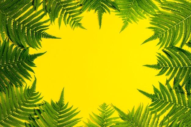 Листья папоротника или пальмы на желтом фоне. понятие о тропиках. копировать пространство плоская планировка, вид сверху