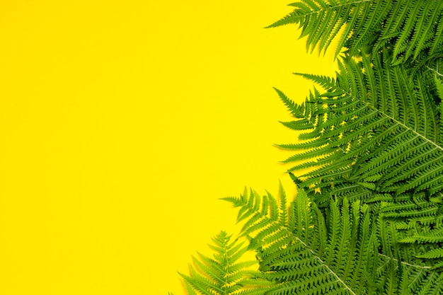 Fern leaves or palm trees on a yellow background. concept of the tropics. copy space. flat lay, top view
