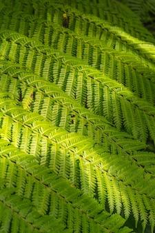 Листья папоротника узор фона тропический зеленый лист текстуры