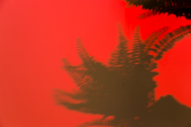 Fern leaves shadow on red background