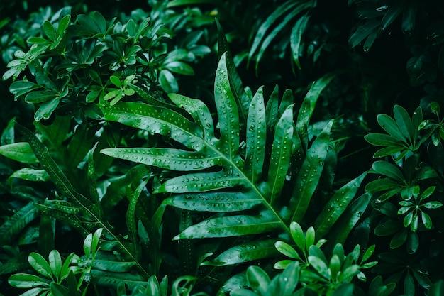 Папоротник оставляет тропический цвет фона