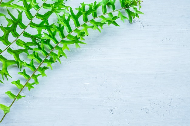 Fern leaves on a white background