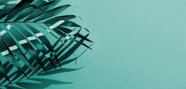 Fern leaves with copy space background