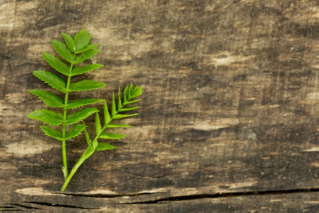 Fern leaves with copy space on wooden background