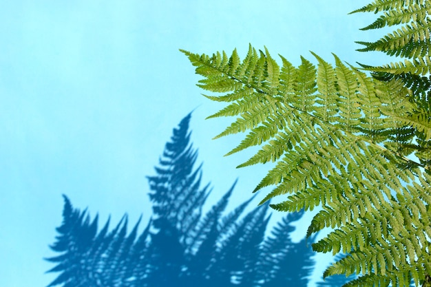 Fern leaves with shadow on light background.
