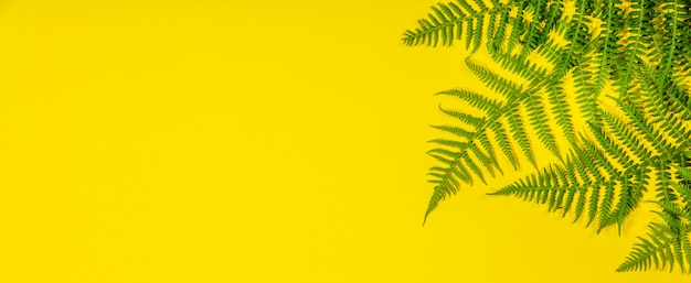 Fern leaves on yelow, flat lay, top view