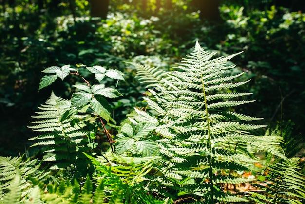 Растение папоротник в лесу