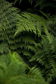 고사리 식물 잎