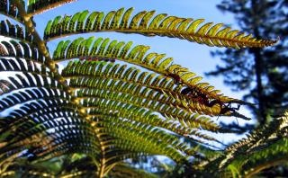 A fern seen from below