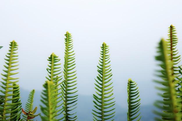 Fern with a fog background.