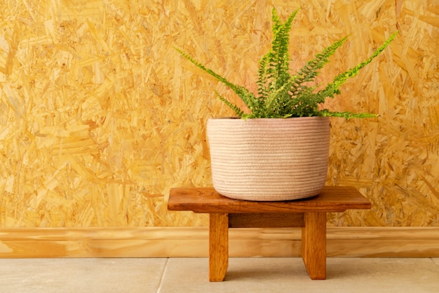 A fern in a woven pot on a light brown wooden wall