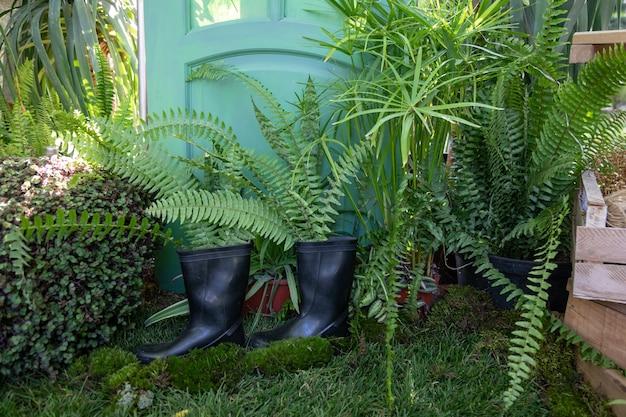 양치류는 정원사의 오래된 고무 장화에서 자랍니다. 온실에 있는 정원사 코너. 오래된 것을 새로운 품질로 사용