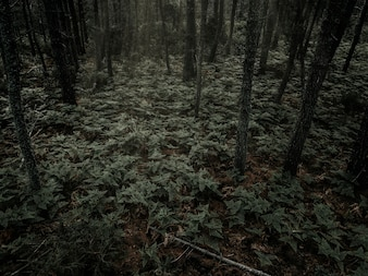 Ferns growing in dense forest