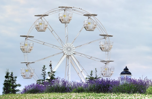 Ferris wheel and lavender bushes in the park on a background of sky.